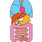 下痢の原因は胆のうに